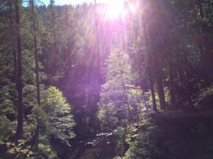 昨年10月にシャスタへ行ったときの写真。光り中に龍神様のようなエネルギーが。